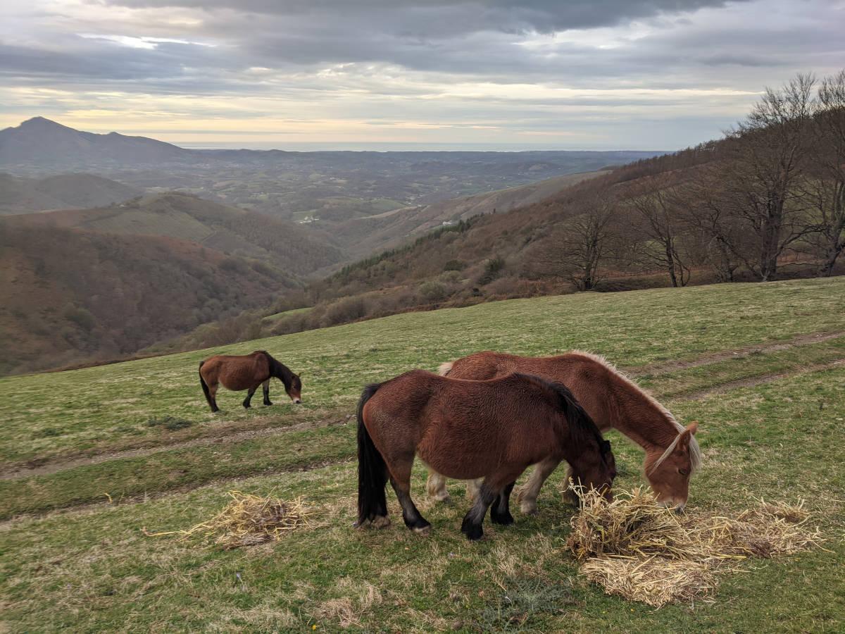 Casa Rural Enekonea en Baztan